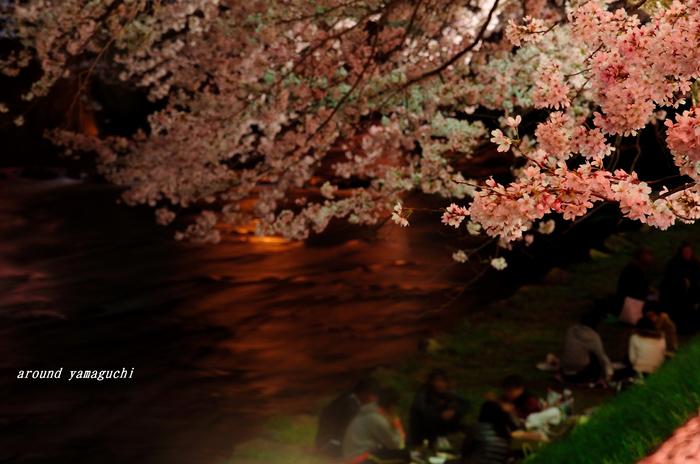美祢夜桜05.jpg