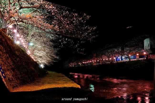 美祢夜桜08.jpg