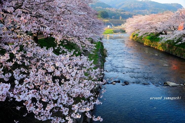 美祢桜公園09.jpg