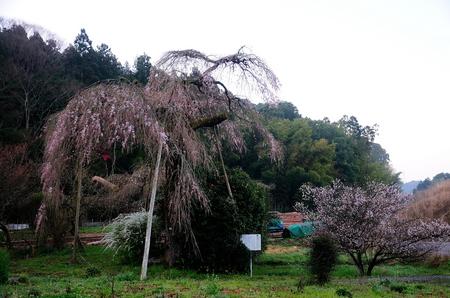 美祢桜公園・下関火の山 006.jpg