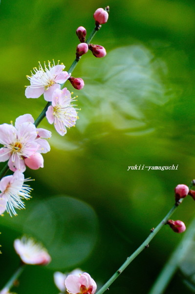 老山梅園02.jpg