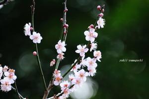 老山梅園04.jpg