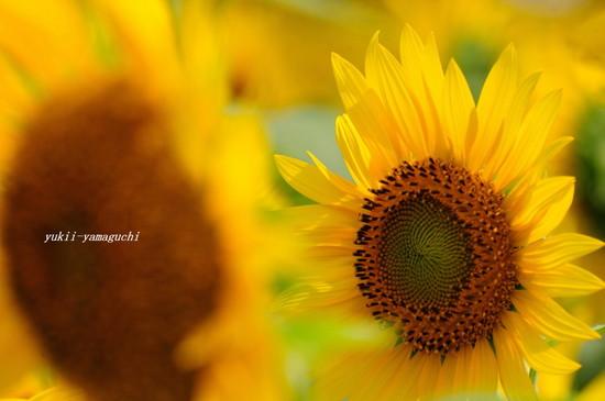 花の海00.jpg