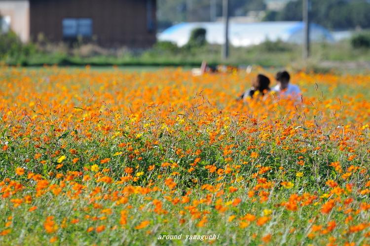 花の海01.jpg