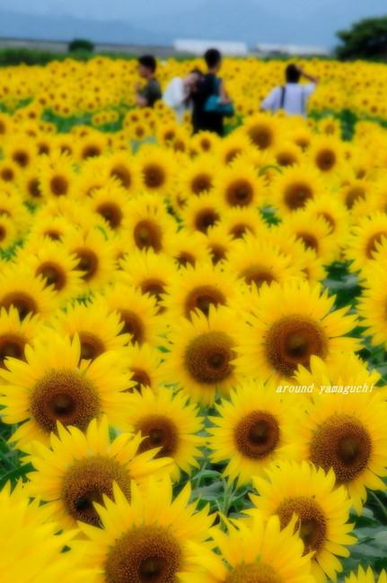 花の海02.jpg