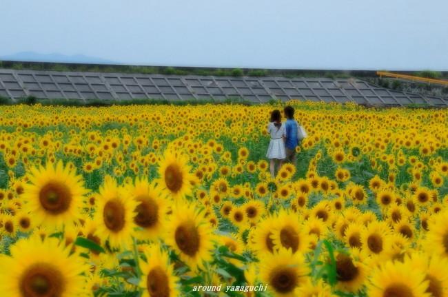 花の海03.jpg