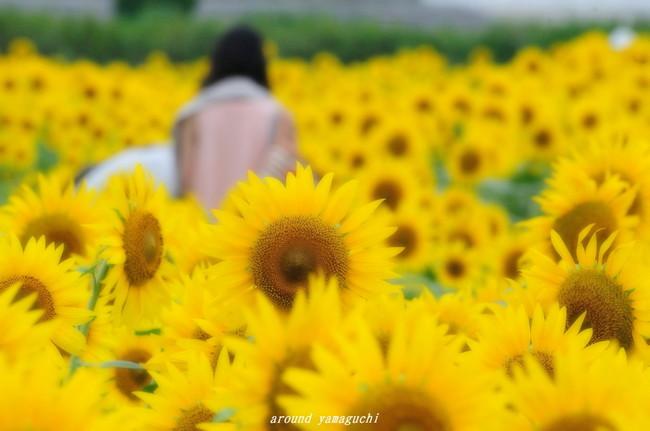 花の海04.jpg