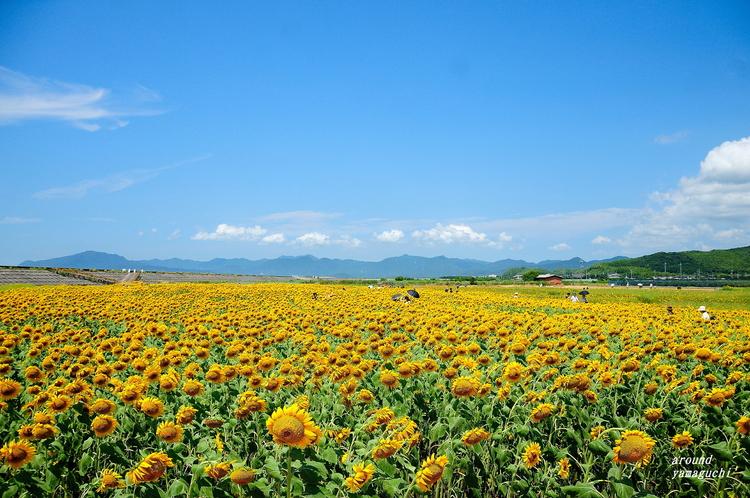 花の海05.jpg