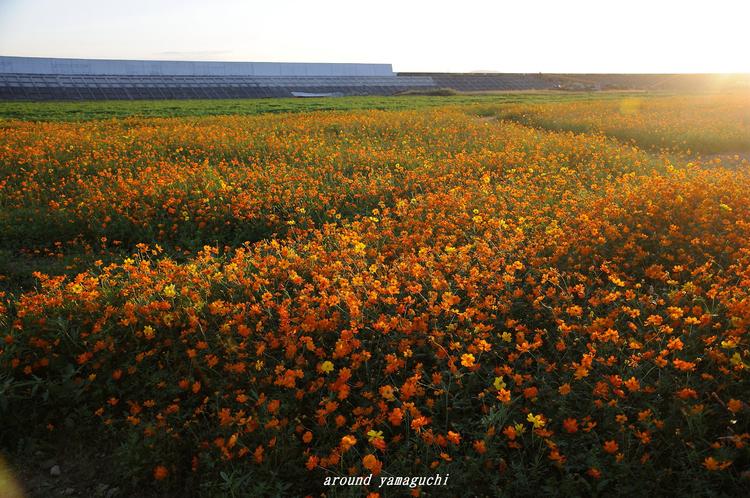 花の海06.jpg