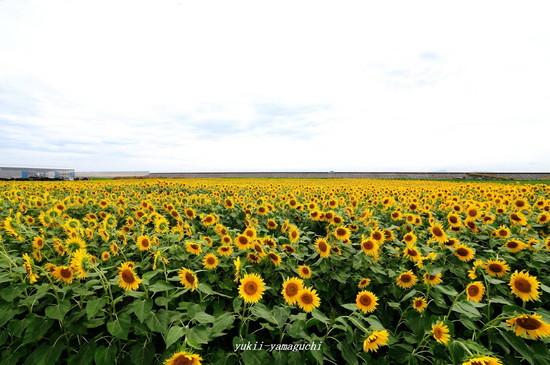 花の海08.jpg