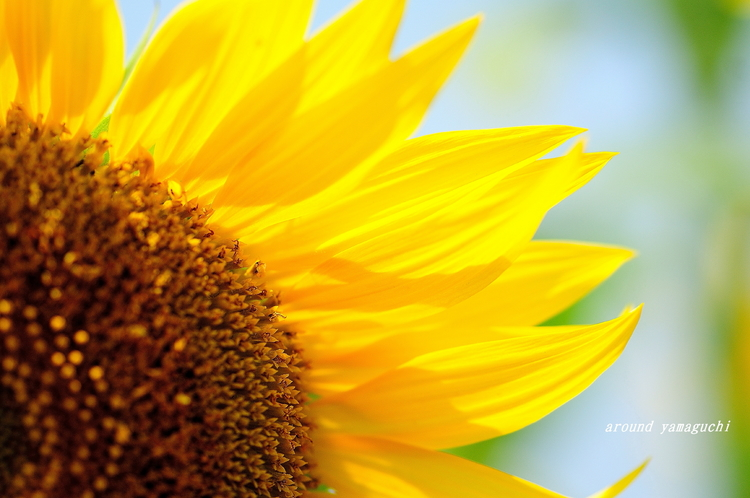 花の海09.jpg