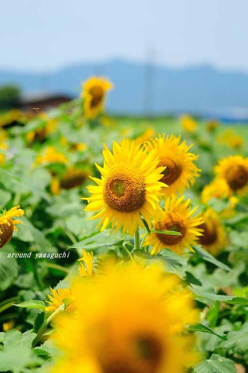 花の海11.jpg