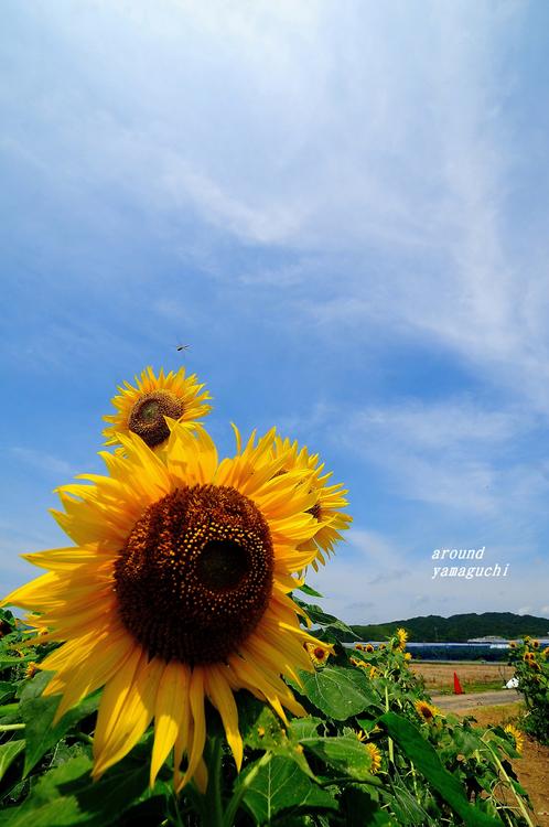 花の海12.jpg