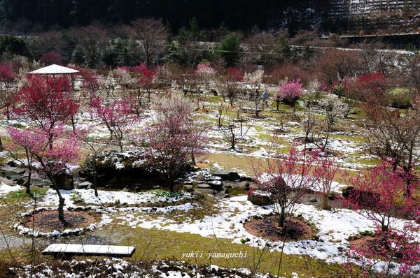 萩往還梅林園09.jpg