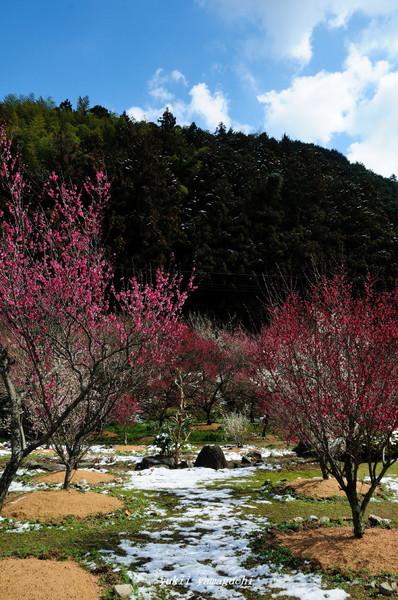 萩往還梅林園10.jpg