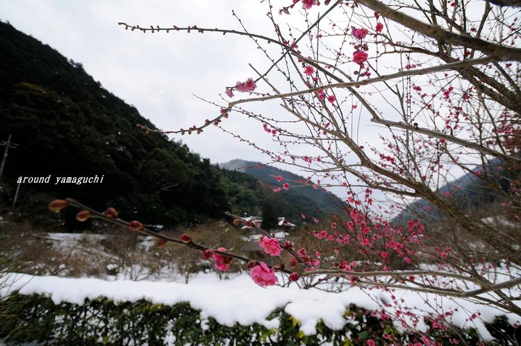 萩梅林園02.jpg