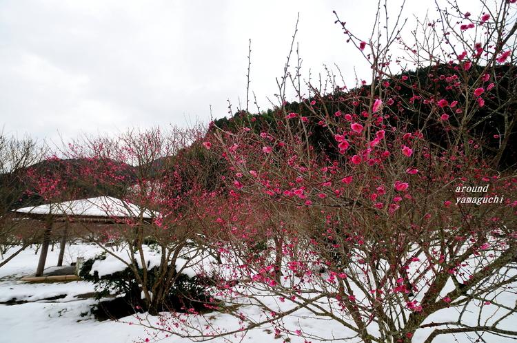萩梅林園07.jpg
