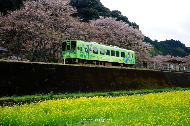 錦川清流線11.jpg