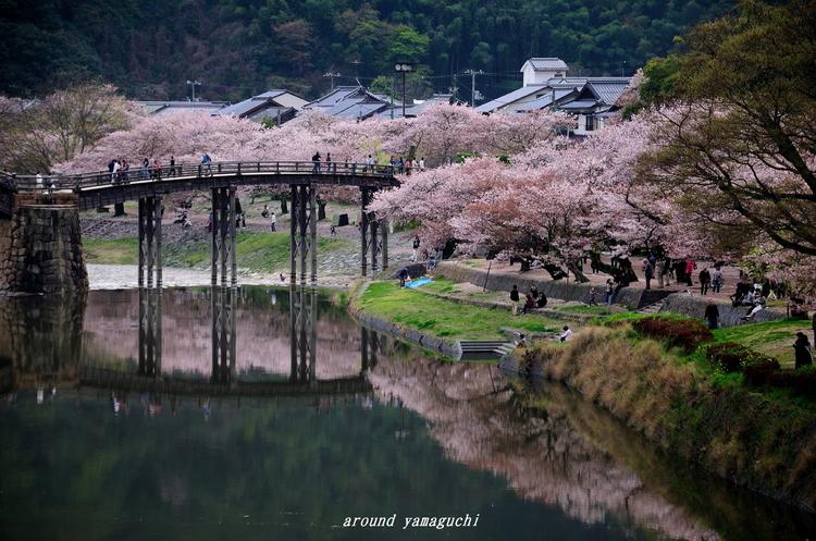 錦帯橋05.jpg