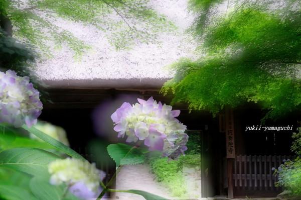 阿弥陀寺0607-08.jpg