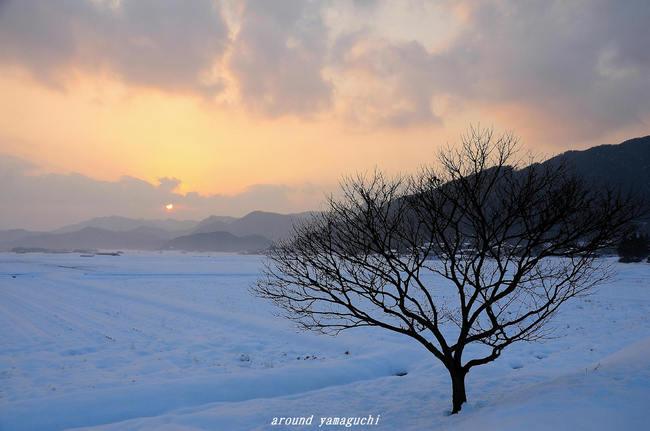 阿東町雪夕景08.jpg