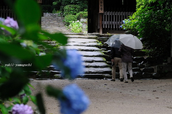 雨の阿弥陀寺01.jpg