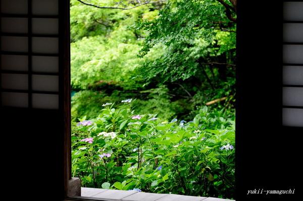 雨の阿弥陀寺06.jpg