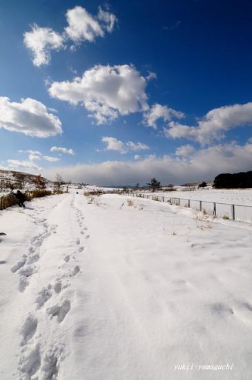 雪の秋吉台09.jpg