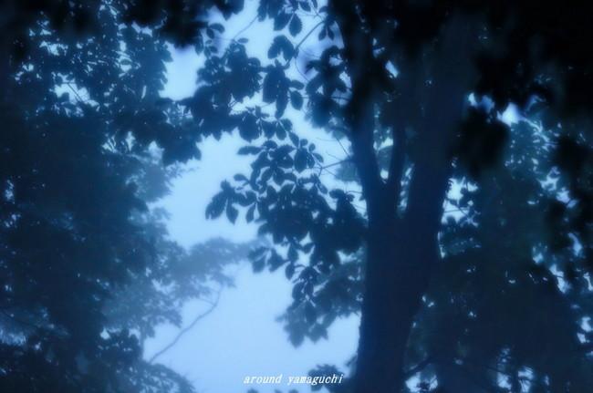 霧中04.jpg