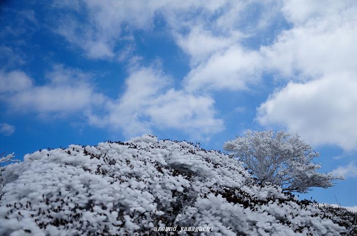 鶴見岳霧氷16.jpg